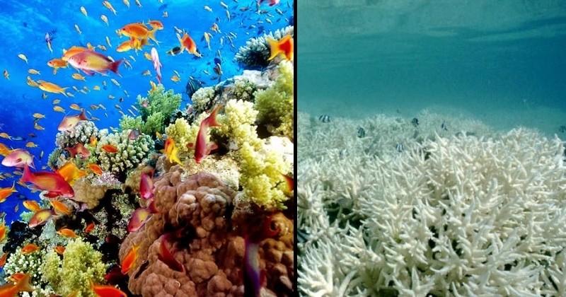 « Nous avons échoué » : c'est le terrible communiqué des scientifiques annonçant que la Grande Barrière de corail vit probablement ses dernières heures...