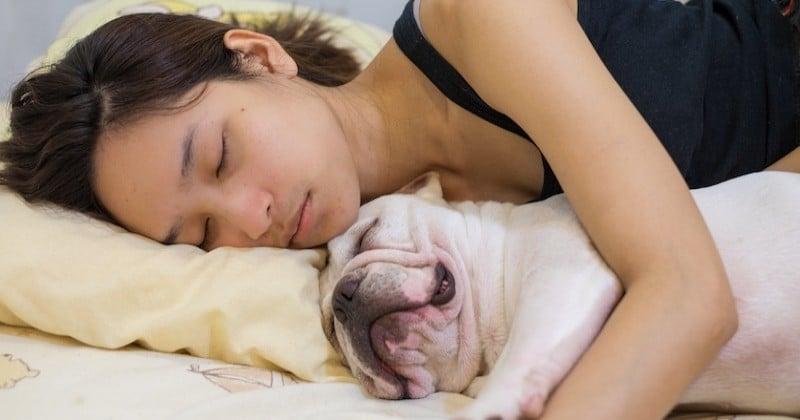 Dormir aux côtés d'un chien serait plus bénéfique qu'avec un être humain