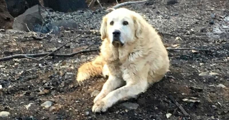 Un mois après les incendies de Californie, un couple retrouve leur chien sur les lieux de leur ancienne maison