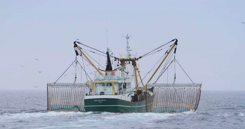 Le Parlement européen interdit définitivement la pêche électrique