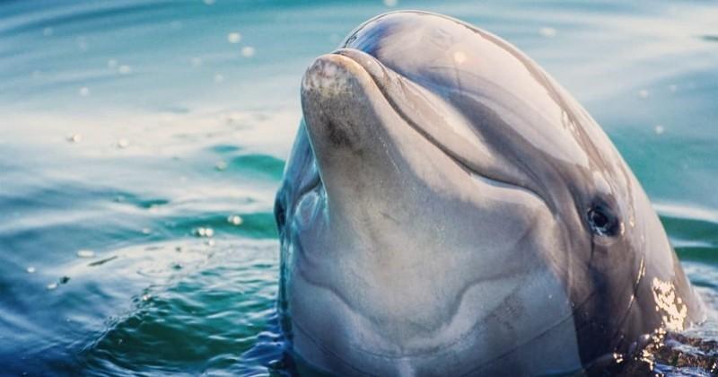 Une association porte plainte contre Marineland pour maltraitance animale sur des cétacés