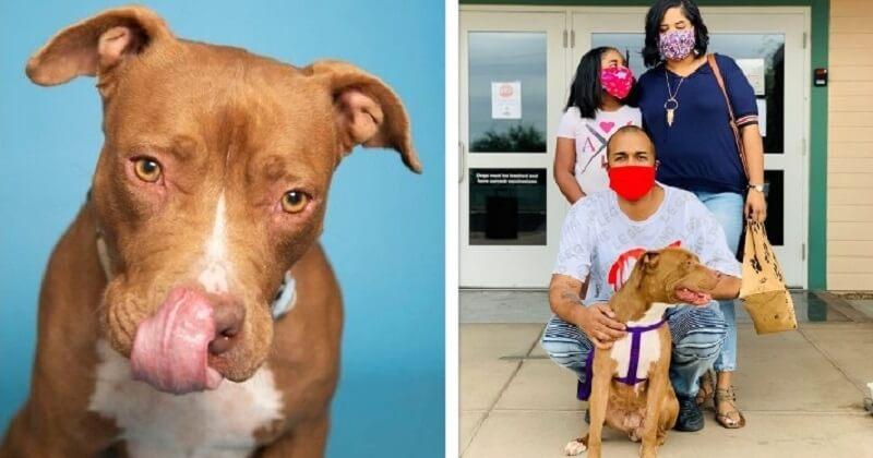 Après 400 jours passés dans un refuge, une jeune chienne a finalement trouvé une famille