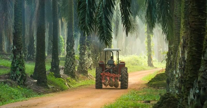 """Un """"recul déplorable"""" selon les écologistes, l'huile de palme reste dans la liste des biocarburants"""