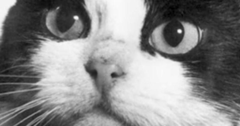 Le premier et unique chat spationaute était français, et des gens se mobilisent pour financer une statue à sa gloire