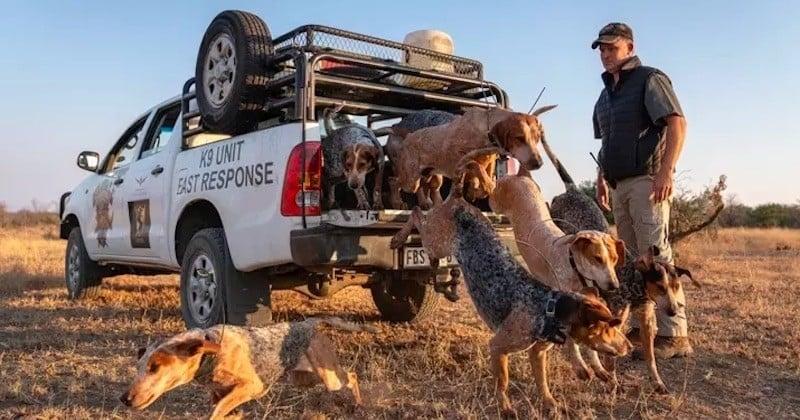 Ces chiens, dressés pour préserver les animaux sauvages, ont sauvé 45 rhinocéros des griffes des braconniers