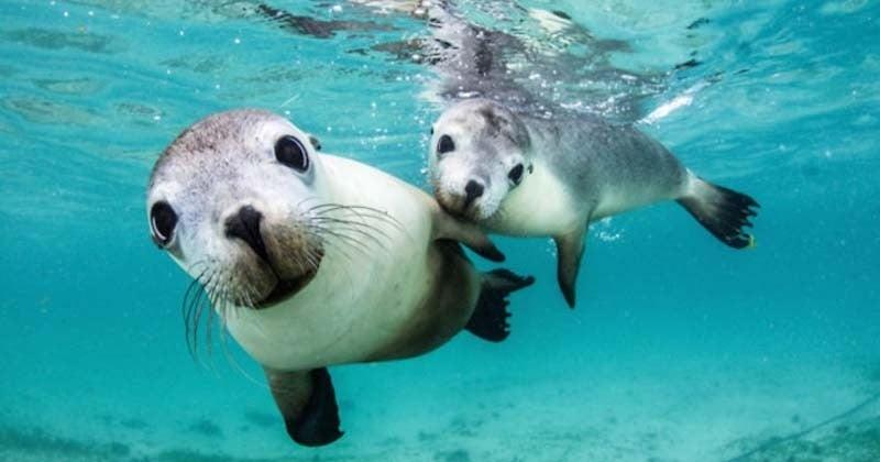 La beauté du monde sous-marin à travers 26 photographies magnifiques prises sous l'eau