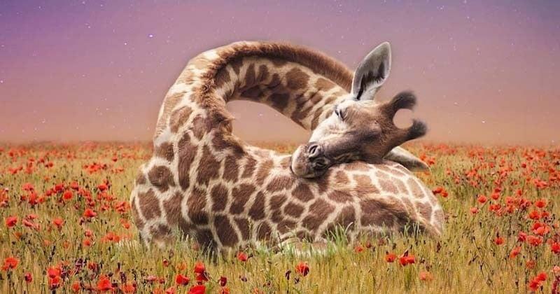 Cette artiste digitale rend hommage au monde animal à travers des photomontages féériques