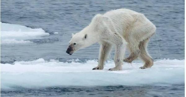 Alerte climatique au Pôle Nord : les températures sont 20°C plus chaudes que la moyenne, la banquise a bien du mal à se reconstituer cet hiver... Et les scientifiques sont très inquiets