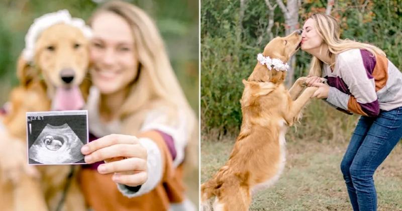 États-Unis : une femme organise une séance photo pour célébrer la grossesse de sa chienne qu'elle a sauvée de la rue