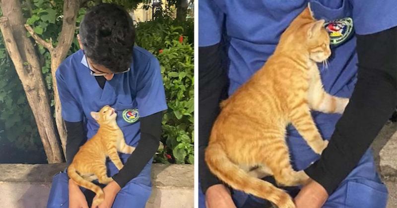 Un chat errant vient réconforter un infirmier épuisé après 12h de service