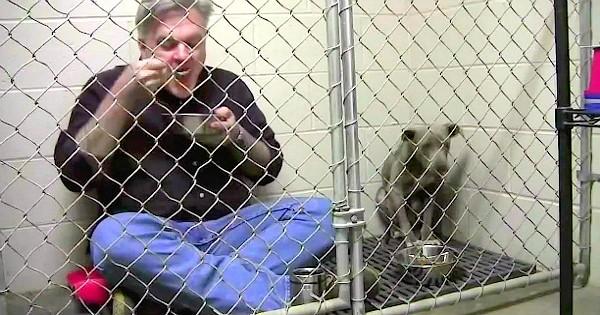 Quand vous découvrirez pour quoi ce vétérinaire mange avec un pitbull abandonné dans une cage, vous allez fondre...