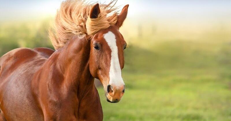Un nouveau cheval retrouvé mort dans les Côtes-d'Armor