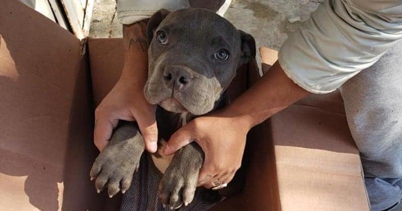 « J'espère que vous pourrez l'aider et prendre soin de lui », un jeune garçon dépose son pitbull devant un refuge pour le protéger de son père violent