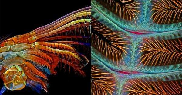 Grâce à un microscope ultra-puissant, découvrez les insectes comme vous ne les avez jamais vus !