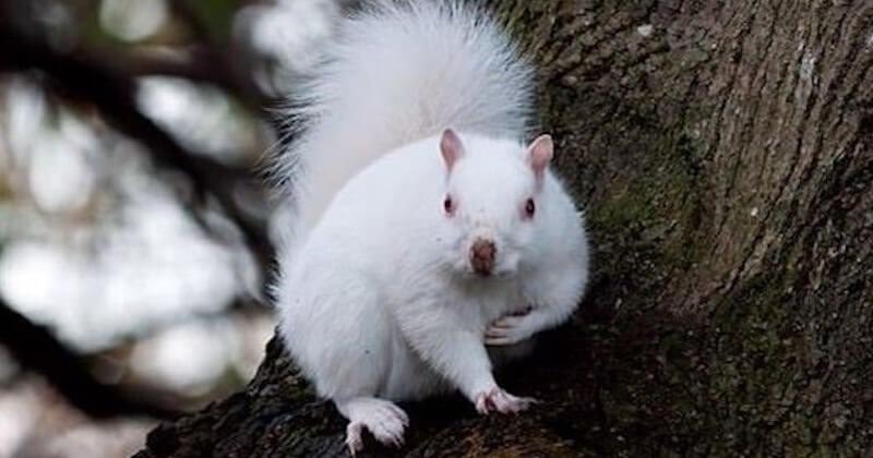 Il tombe nez à nez avec un écureuil albinos très rare et délivre de sublimes photos