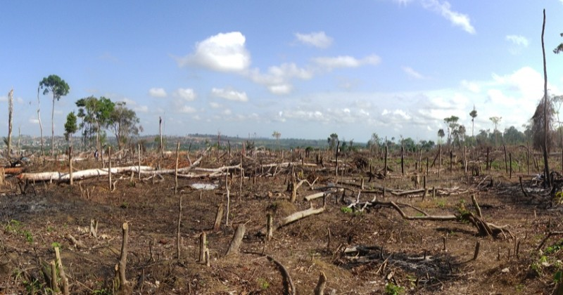 Déforestation : sans le savoir, un citoyen français consomme l'équivalent de 352 m2 de forêt par an