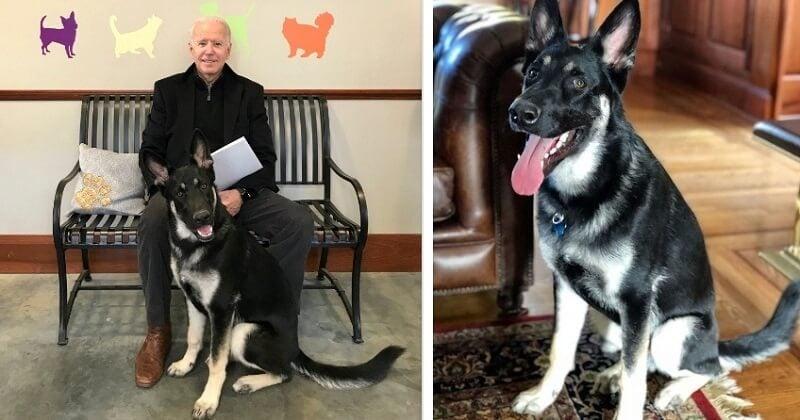 Le chien de Joe Biden aura le droit à sa propre cérémonie d'investiture organisée par le refuge dont il est originaire
