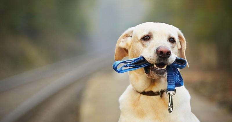 En Chine, une ville instaure un permis à points pour les propriétaires de chien