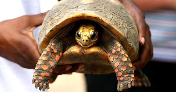 En retournant dans leur maison de famille à la mort de leur père, ils tombent nez à nez avec leur tortue qu'ils croyaient morte il y a... 30 ans !