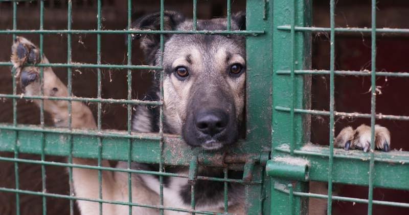 En Allemagne, les refuges animaliers interdisent les adoptions pour Noël