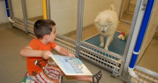 Grâce à ces enfants qui apprennent à lire, ces animaux timides placés en refuge reprennent goût à la vie