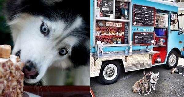 Découvrez le premier food truck uniquement dédié aux chiens ! C'est énorme !