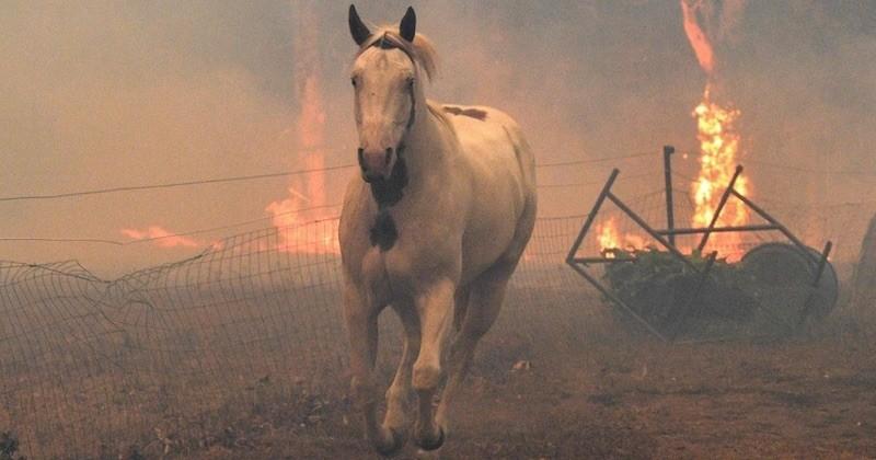 Australie : 480 millions d'animaux auraient péri dans les flammes depuis le début des incendies qui ravagent le pays
