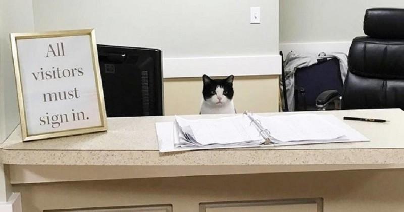 Dans cet hospice, ce chat vient tous les jours pour réconforter et distraire ses résidents