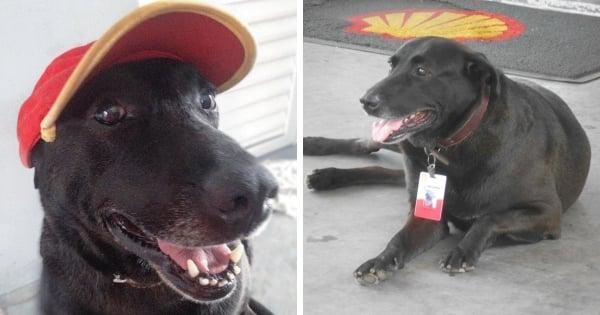 Découvrez l'histoire de Negão, un chien lâchement abandonné et qui est devenu l'employé le plus cool d'une station essence