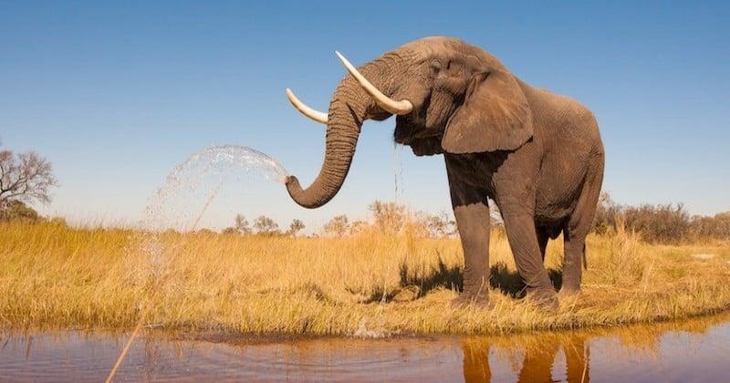 Le premier sanctuaire pour éléphants d'Europe va ouvrir en France