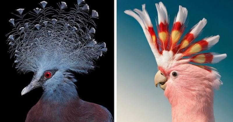 Cette série de portraits consacrée aux oiseaux en voie extinction est tout simplement magnifique