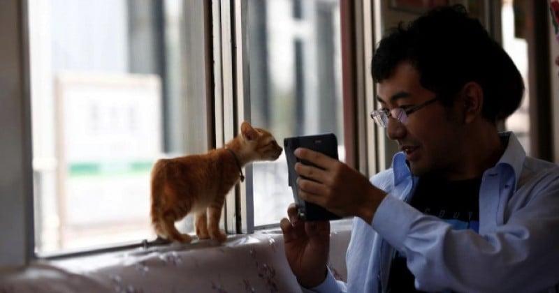Japon : un train pour chats afin de sensibiliser l'opinion sur l'abandon des félins