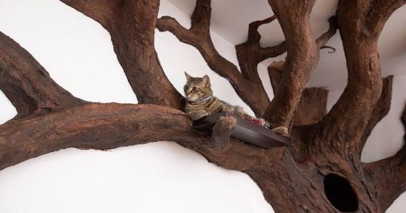 Il ridiculise le concept des arbres à chat en créant un véritable arbre pour son félin dans son salon