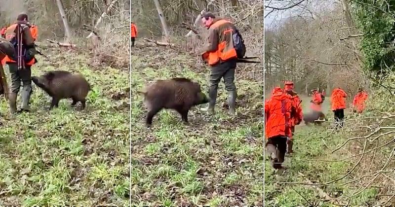 Vidéo : des chasseurs abattent un sanglier domestiqué à bout portant après s'être illégalement introduits sur un terrain privé
