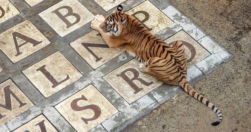 «Fort Boyard»: les tigres vont progressivement disparaître du jeu