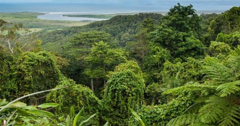 D'ici 2050, un milliard d'arbres vont être plantés en Australie pour atteindre ses objectifs climatiques