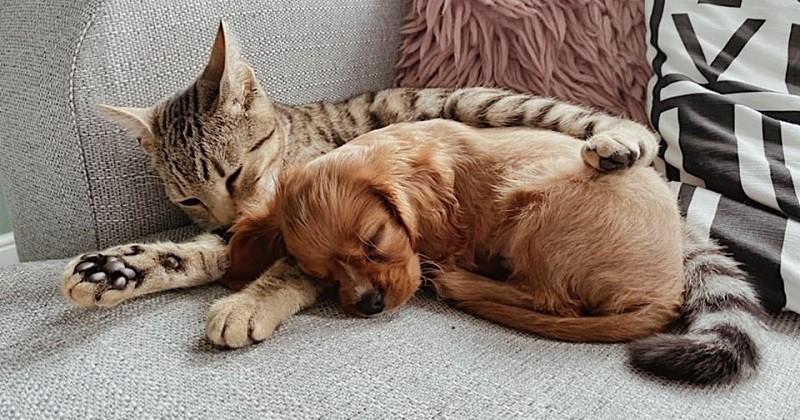 Ce chat et ce chien sont les meilleurs amis du monde