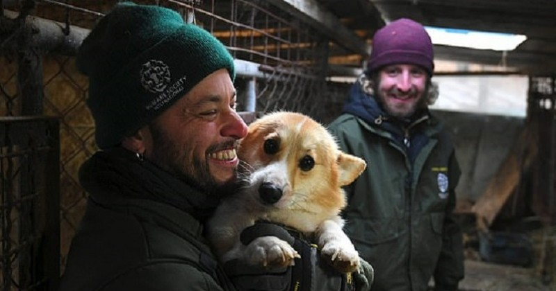 En Corée du Sud, 200 chiens sont sauvés d'une ferme où ils étaient destinés à l'abattoir