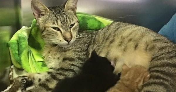 Après avoir été séparés, ces chatons retrouvent enfin leur maman... Vous allez craquer devant la vidéo !
