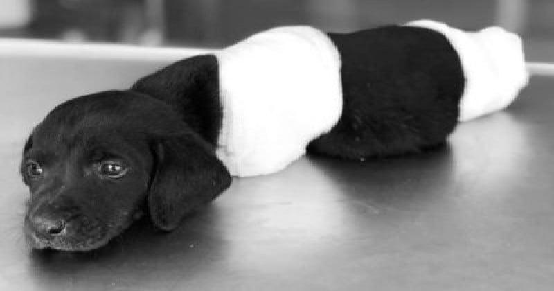 La mort d'un chien démembré suscite l'indignation en Turquie, à quelques jours de l'élection présidentielle