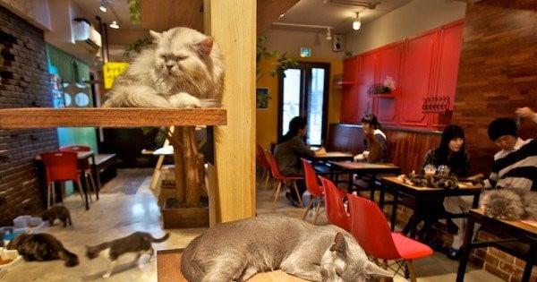 Voici les 10 restaurants les plus bizarres du monde ! Le 5 est complètement délirant, vous n'êtes pas prêts...
