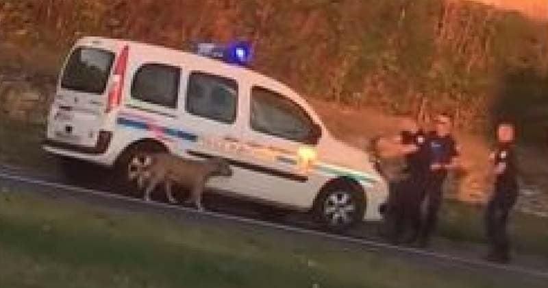 Cette vidéo montrant des policiers abattre un chien perdu suscite émoi et indignation