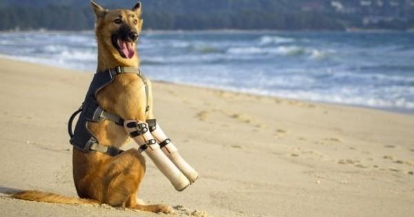 Mutilé par un voisin, le chien Cola s'est battu pour reprendre goût à la vie... et il a réussi !