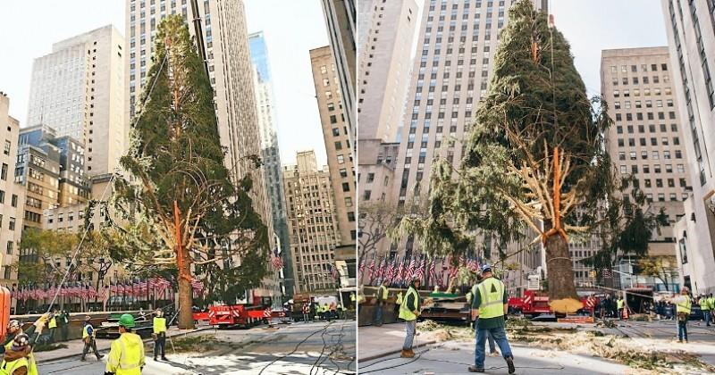 New York : les internautes se moquent du triste sapin de Noël du Rockefeller Center et le comparent avec humour à l'année 2020