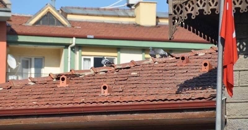 En Turquie, des « tuiles-nids» ont été installées sur les toits pour loger et protéger les oiseaux