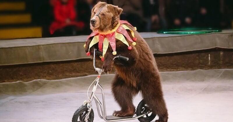 Le projet de loi sur le bien-être animal propose d'interdire les bêtes sauvages dans les cirques