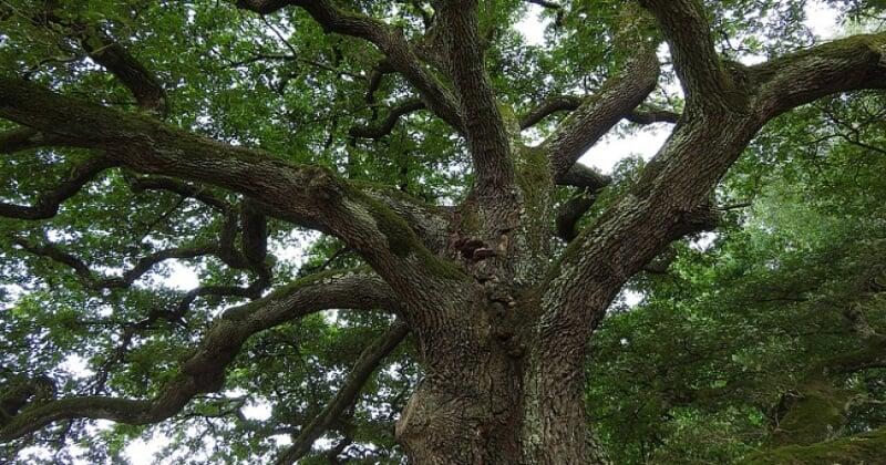 Mulhouse : une forêt Miyawaki de 8 000 m2 est en cours de plantation près d'une autoroute