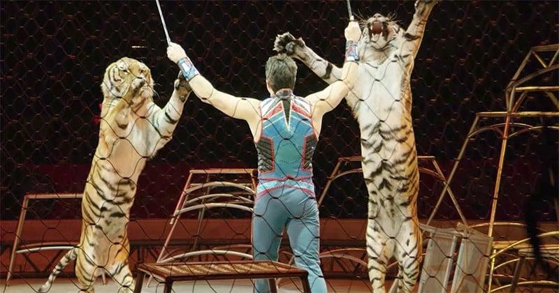 Aux États-Unis, une loi va bientôt interdire les spectacles d'animaux dans les cirques !