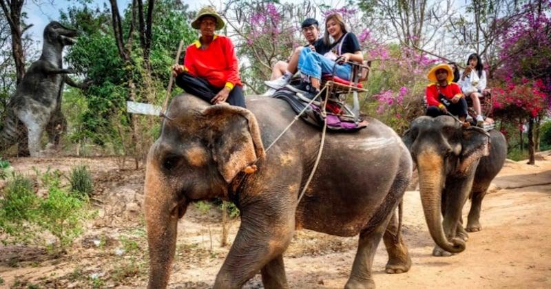 Thaïlande : le cruel dressage des « éléphants à touristes » dévoilé dans une vidéo