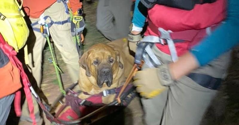 Exténué après une randonnée en montagne, ce gros chien de près de 90 kilos a été secouru lors d'un improbable sauvetage